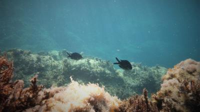 Βυθός-Θάλασσα