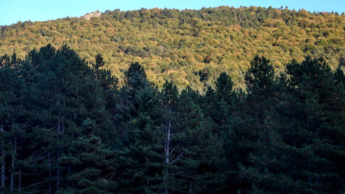 Δέντρα Δάσος Βουνό