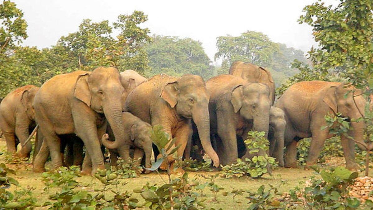 Μεθυσμένοι Ελέφαντες