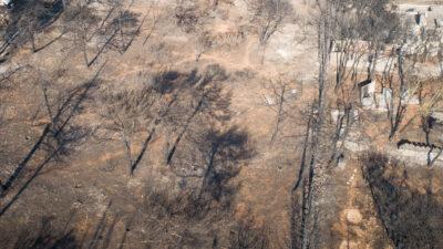 Καμμένα δέντρα Μάτι ένα χρόνο μετά την πυρκαγιά