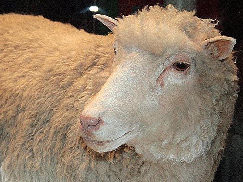 """Το πρώτο κλωνοποιημένο πρόβατο """"Ντόλυ"""""""