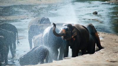 Ελέφαντες σε ποτάμι