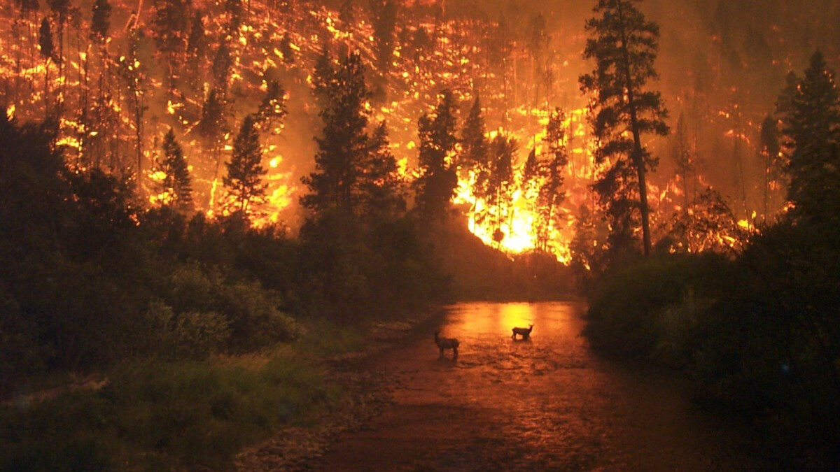 Δασική πυρκαγιά στις ΗΠΑ