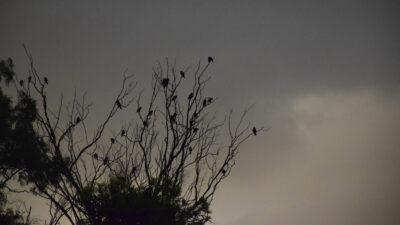 Κακοκαιρία- Καταιγίδα- Συννεφιά