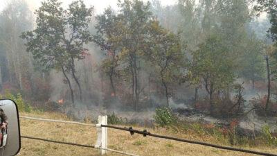 πυρκαγιά σε δασική έκταση στην ουκρανία