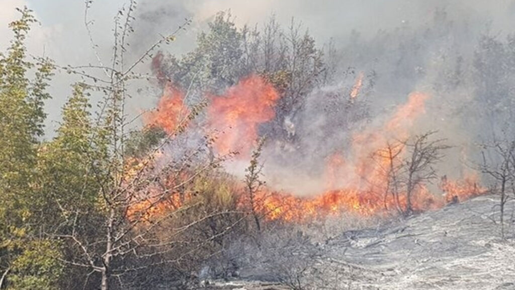 Πυρκαγιά στη Λευκίμμη Σουφλίου, στον Έβρο