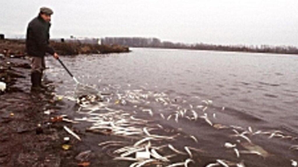 Οικολογική καταστροφή στο Ρήνο το 1986