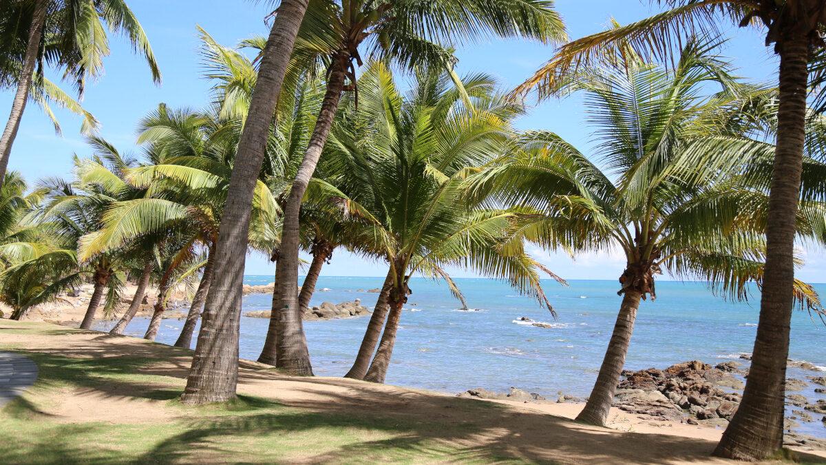 Χαρακτηριστική παραλία με φοίνικες στο τροπικό νησί Χαϊνάν, Κίνα - Νότια Κινεζική Θάλασσα
