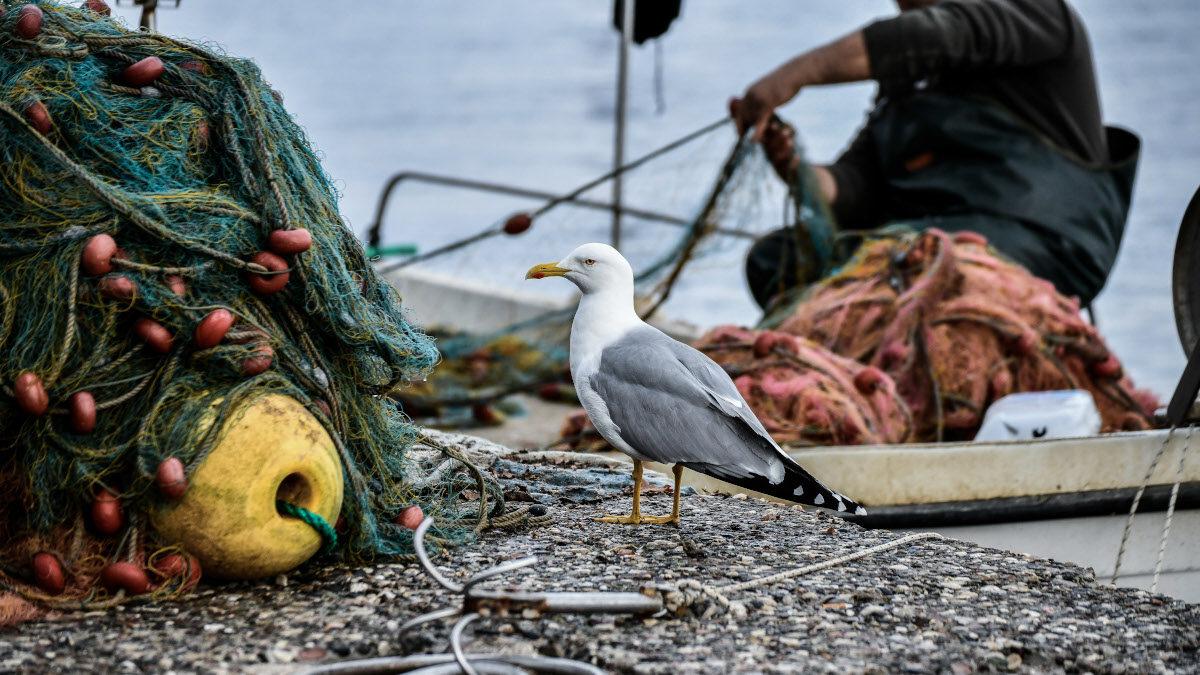 Λιμάνι Πρέβεζας - Γλάρος - Δίκτυα - Ψαράς