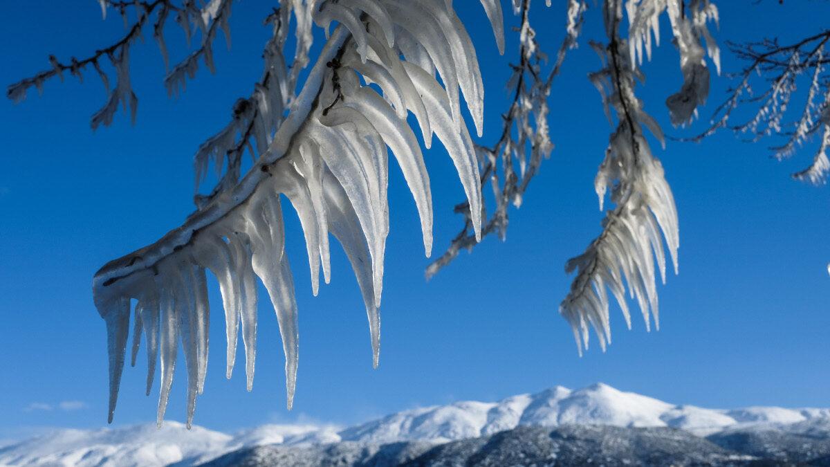 Παγωμένο δέντρο στη λίμνη Ιωαννίνων