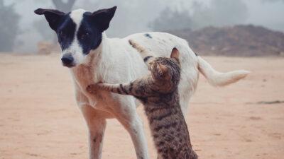Γάτα και σκύλος