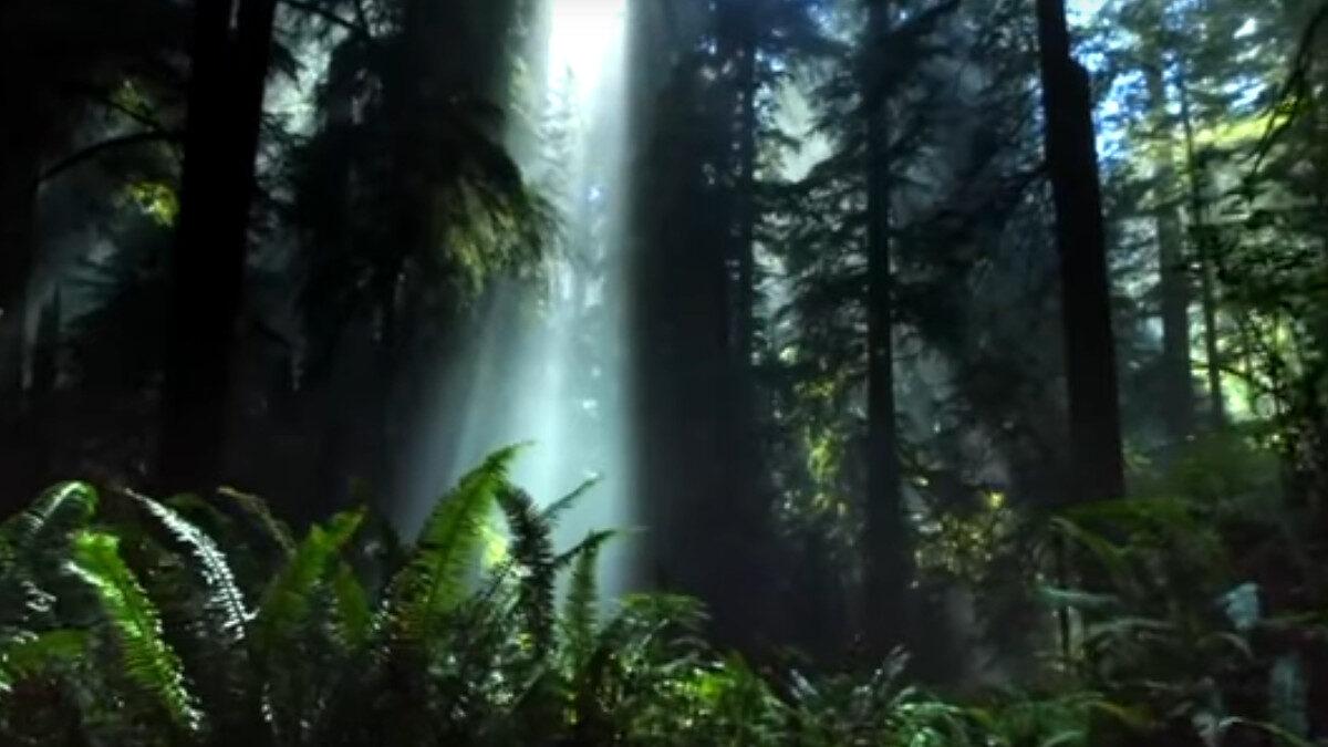 Δάσος - Στιγμιότυπο από το Βίντεο της Πυροσβεστικής Υπηρεσίας για την Προστασία των Δασών