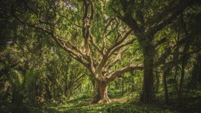 Δάσος -Δέντρο - φύση - περιβάλλον