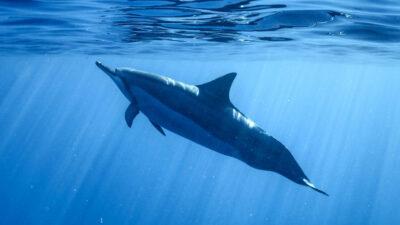 Δελφίνι, θάλασσα
